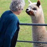 In defence of our friend the alpaca