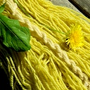 Dyeing with dandelion leaves