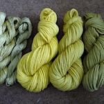 Goldenrod plant dye on wool and silk