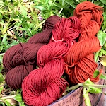 Madder root dye with alum, rhubarb and iron