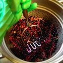 Pokeberry Adventure