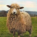 Wonderful Wool Day